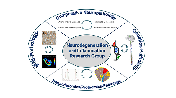 Neurodegeneration and inflamation .png