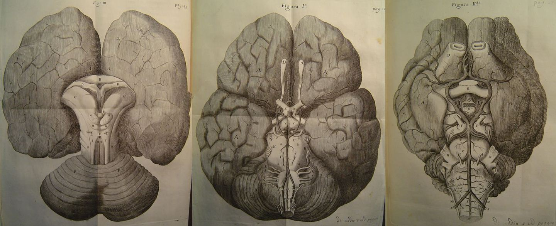 Images from Thomas Willis' 'Cerebri Anatome,' 1664